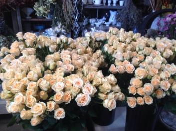 Girlie Folie Spray Roses