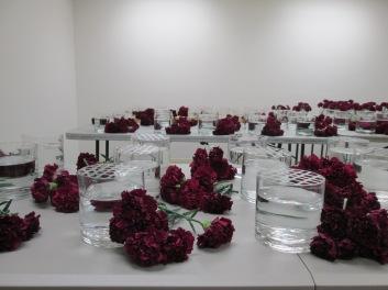 Hammer 2013 Carnations