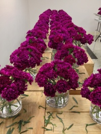 Hammer 2013 Step 2 Carnations