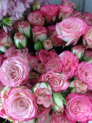 Variegated Spray Roses