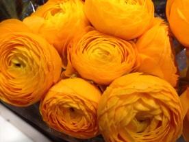 Gold Ranunculus