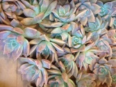 Marble Succulents