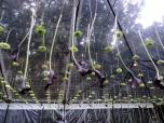 hanging garden callas and spider mums