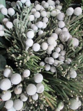 Silver Brunea
