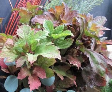 Viburnum Leaves