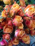 Mambo Spray Rose