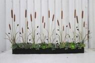 Succulents, Cat Tails