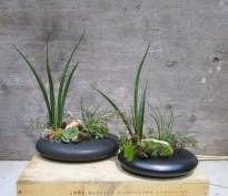 Succulent Pebbles